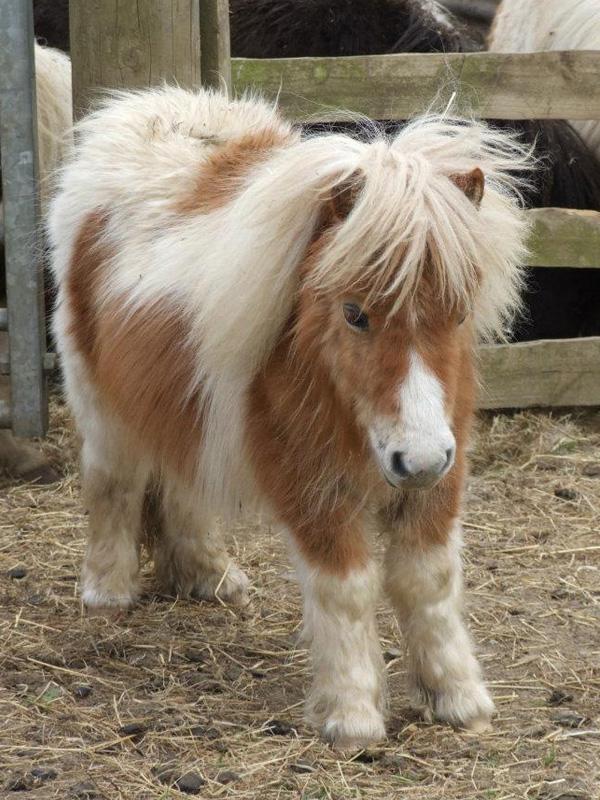 HKM Loose Ring Snaffle For Shetland Pony 12mm