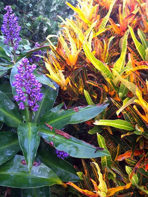 How To Grow A Tropical Garden - purple and orange plants