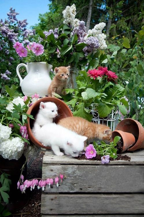 Kittens having fun in the garden