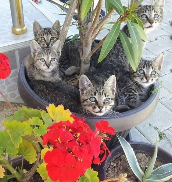Kittens or a pot plant?
