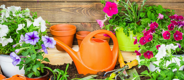 Affordable gardening - garden tools and plants