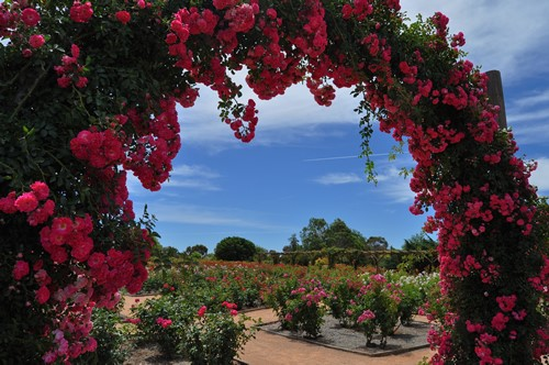 Australian Inland Botanic Gardens, Buronga - NSW