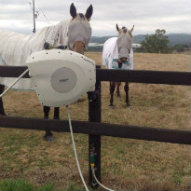 Two horses checking out the new Hoselink Retractable Reel