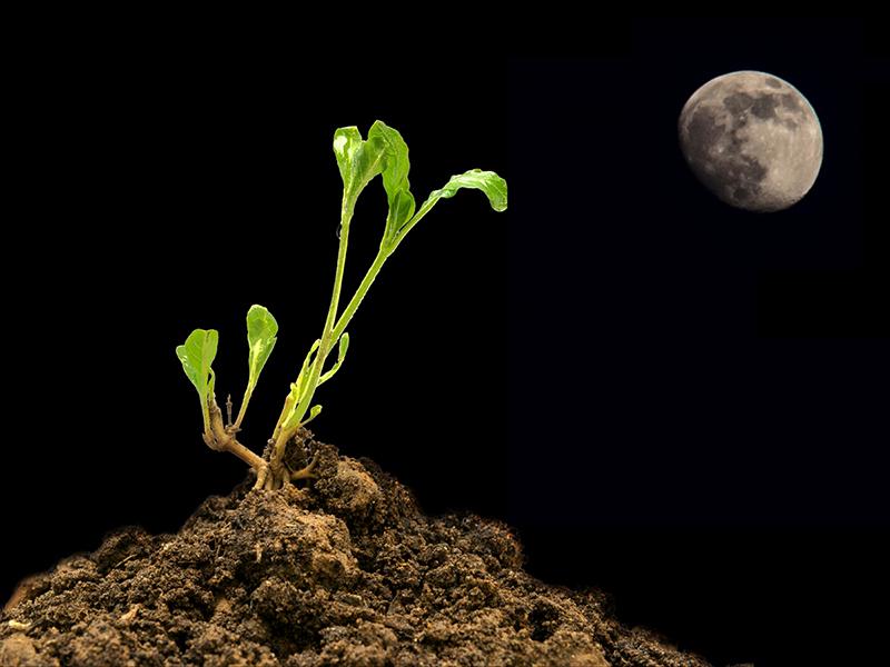 Moonlight planting