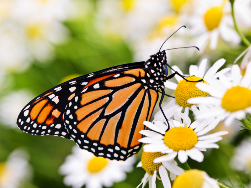 8 Types of Beautiful Butterflies – Hoselink