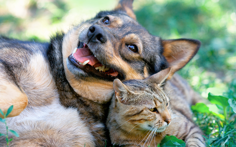 dog and cat in the garden