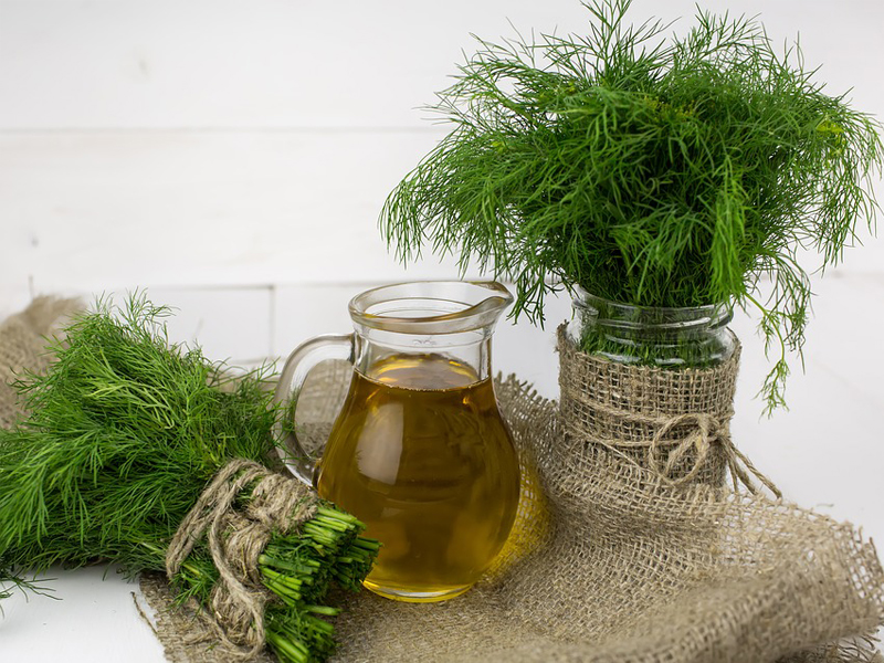 Dill for growing your own kitchen herb garden