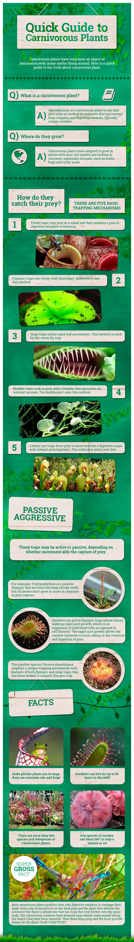A Quick Guide to Carnivorous Plants