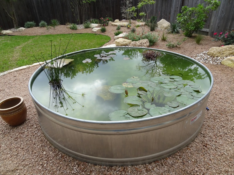 A pond in a large metal tub