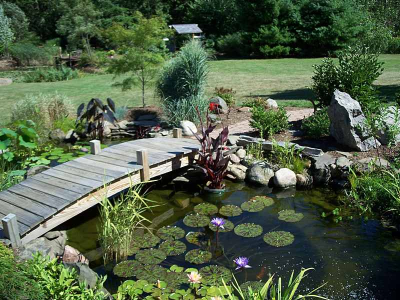 13 gorgeous garden pond ideas for Fish pond cover ideas