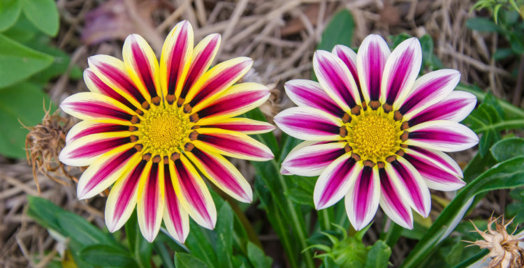 Top 10 Drought-tolerant Plants You Should Grow – Hoselink