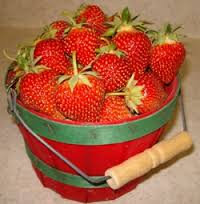 a bucket of fresh strawberries