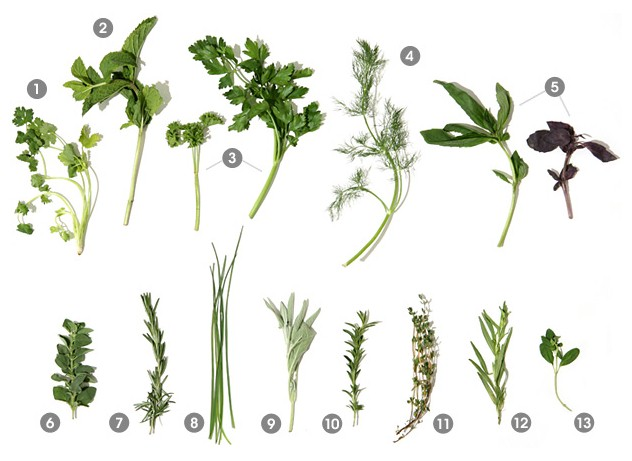 Quick guide to a variety of easy to grow herbs