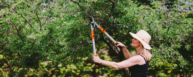 Gardener pruning a tree with Hoselink Loppers