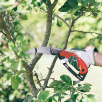Pruning tree with Hoselink pruning saw