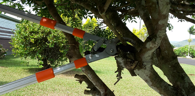 Hoselink Lightweight Loppers being used to prune a tree