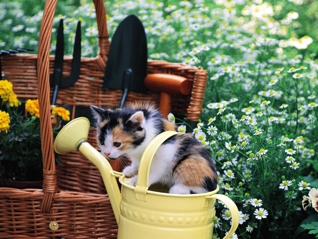 Kitten in a watering can