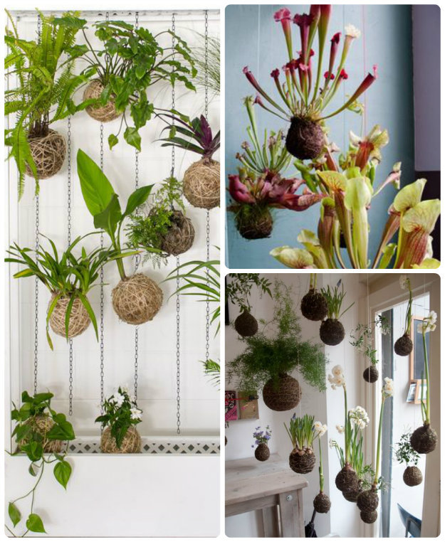 A group of Kokedama moss balls hung from the ceiling