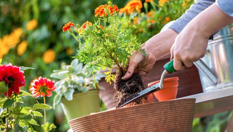Top 10 Drought-tolerant Plants You Should Grow – Hoselink