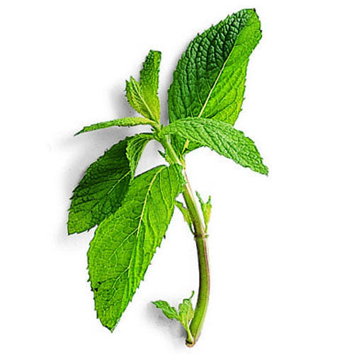 Mint for growing your own kitchen herb garden