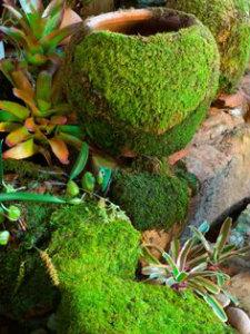 Moss covered garden pots