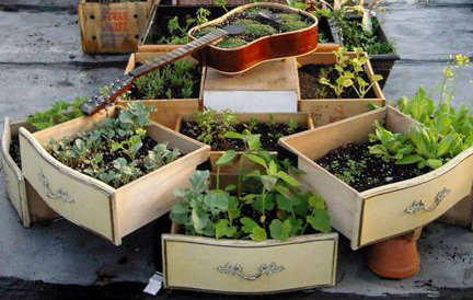 Plants planted in recycled old draws and a guitar