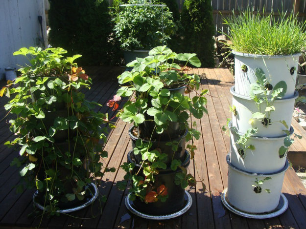 Vertical Gardening - Pots stacked on top of one another, with hole on the sides for plants
