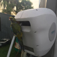 Parrot on a Hoselink Retractable Reel