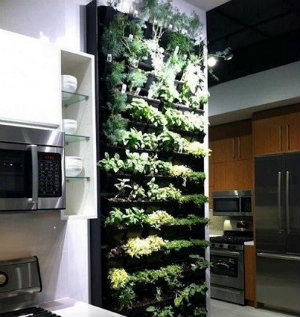 Vertical planting wall hanging in a kitchen