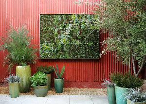Succulents planted in a frame on an outside wall