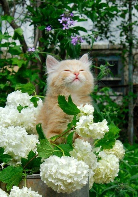 Kitten smelling the flowers
