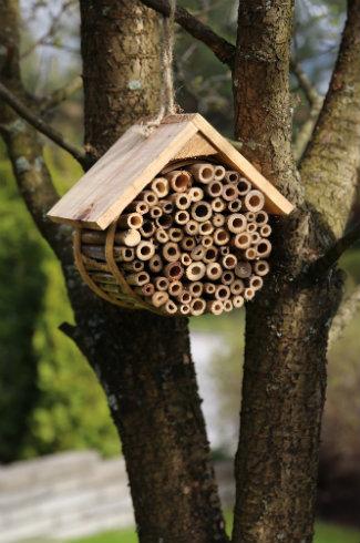 abri-abeilles-sauvages
