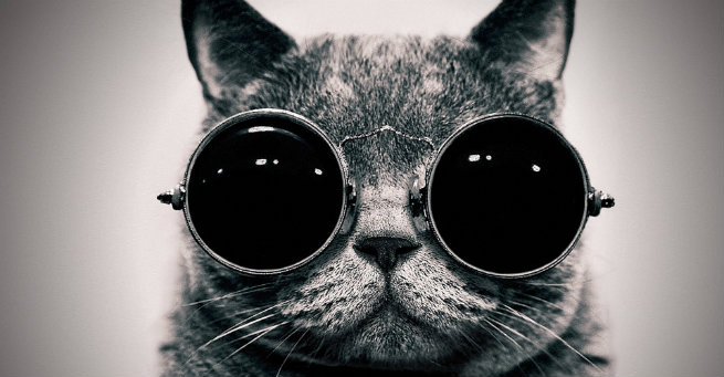 Cat wearing sunglasses - Keep Your Pets Cool This Summer