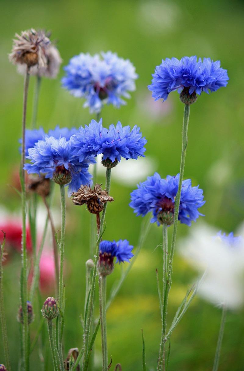 6 Blue Flowers