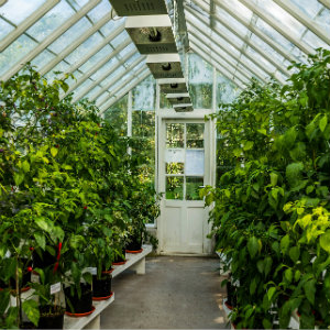 Inside a neatly organised greenhouse