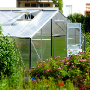 standard greenhouse in the garden