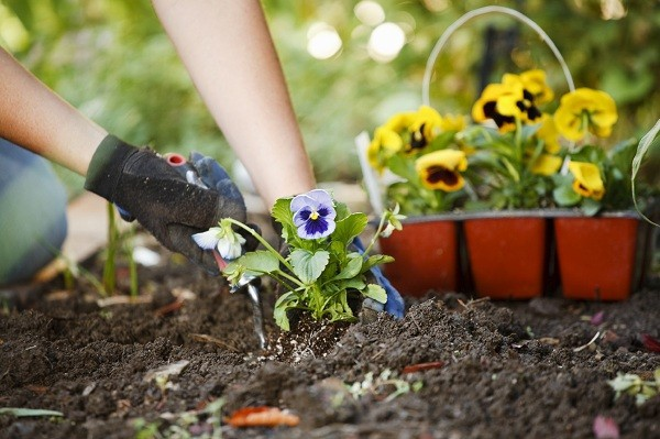 Top 10 Gardening Tips For An Australian Spring Hoselink