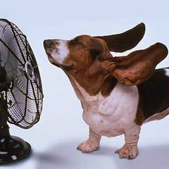 dog enjoying a fan - Keep Your Pets Cool This Summer