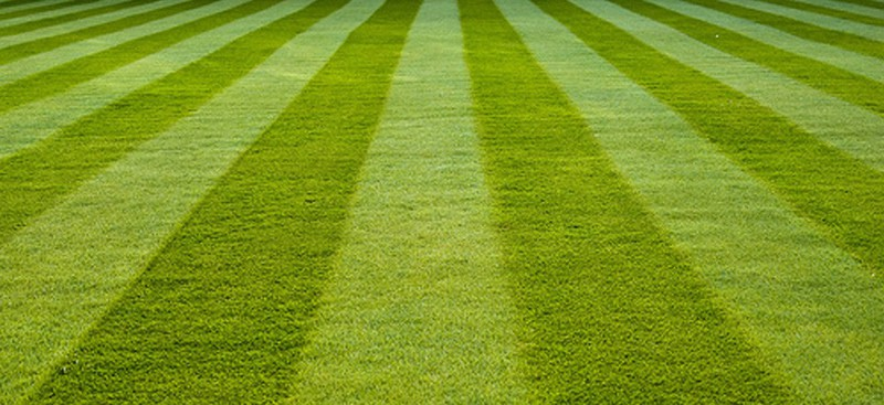 Perfect green lawn which can be achieved at home