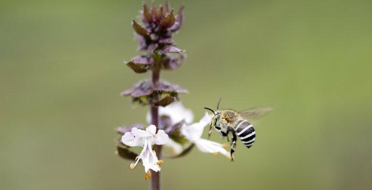flowers Garden Accessories Free ship Mix 10 Tiny Bees butterflies