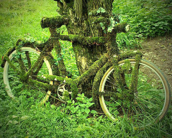 moss covered old bicycle