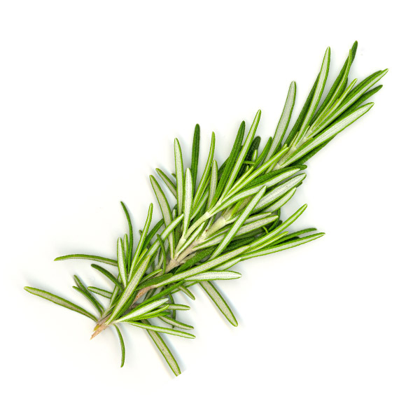 Rosemary for growing your own kitchen herb garden