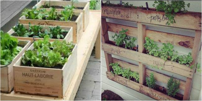 Salad Planter