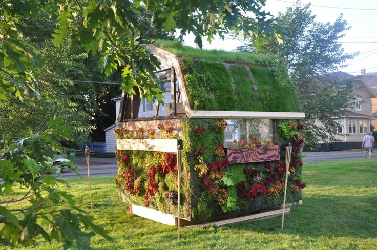 shed completly covered in plants