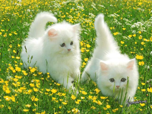 Kittens playing in the flower fields
