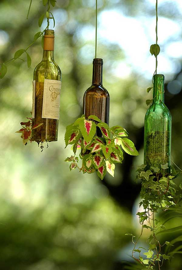 Wine Bottles for pot plants